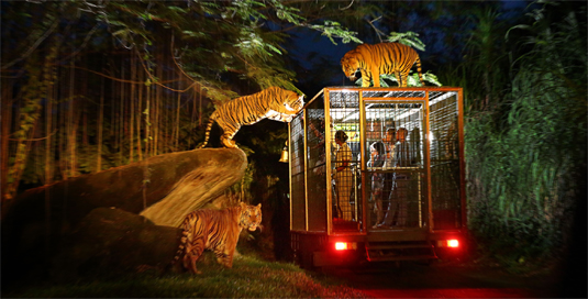 night safari, bali safari, marine park