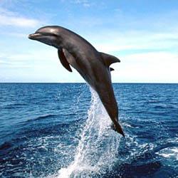 dolphins, lovina, beach