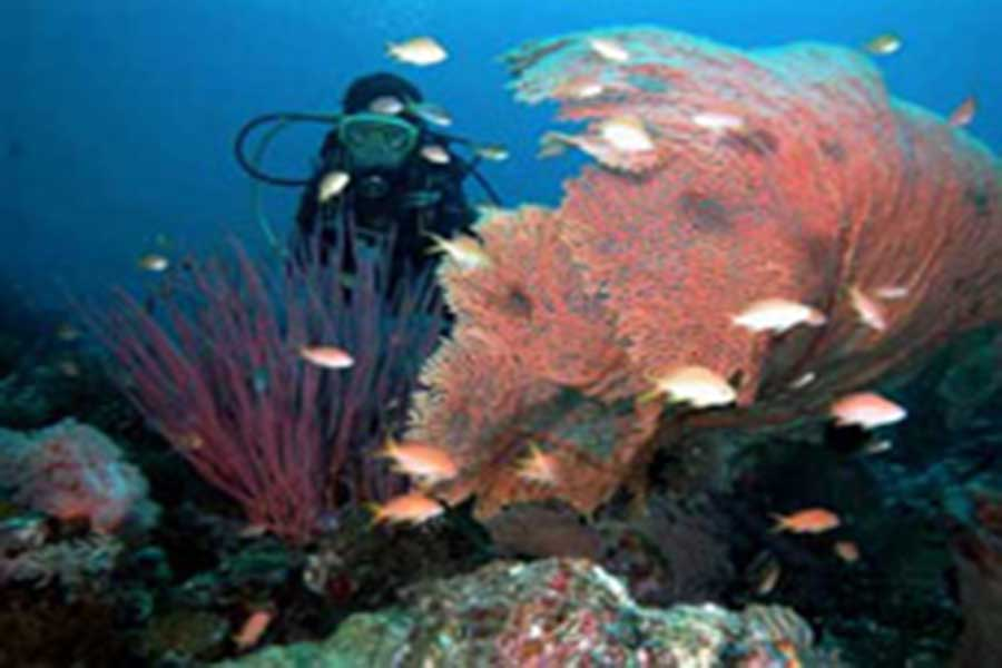 diving at menjangan island