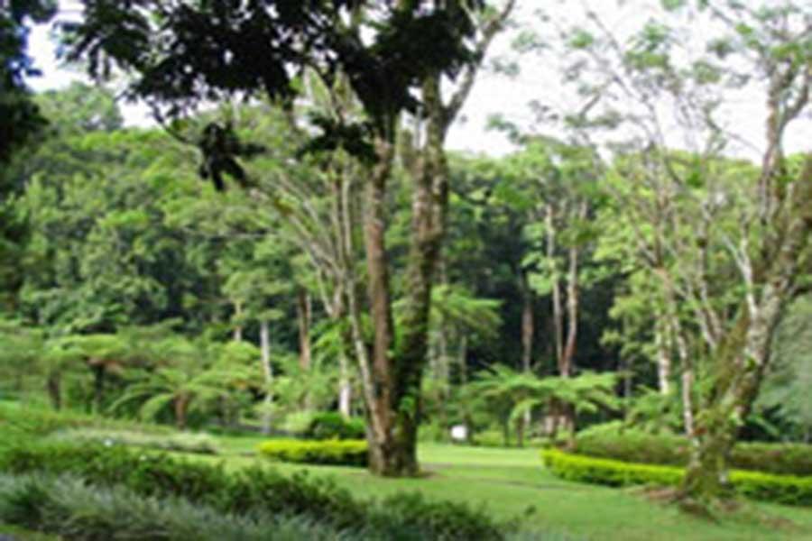 kebun raya eka karya view