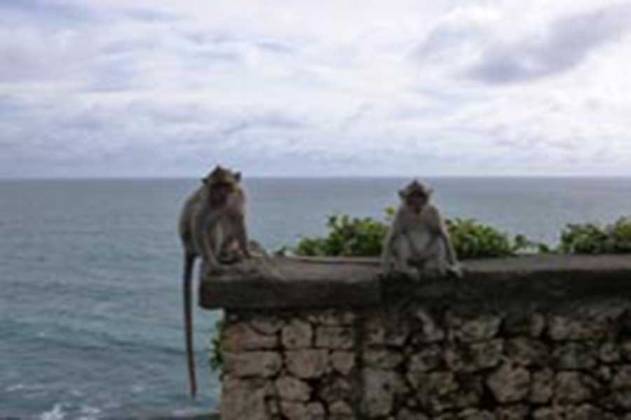 uluwatu temple, monkeys