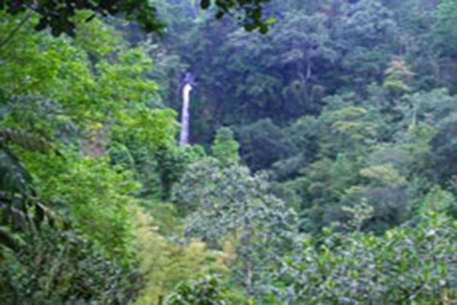 singaraja, waterfall, gitgit, bali