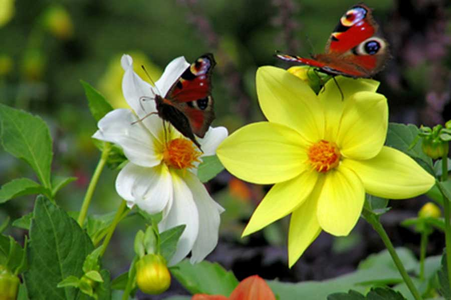 butterfly park tabanan, beratan lake, honeymoon package bali