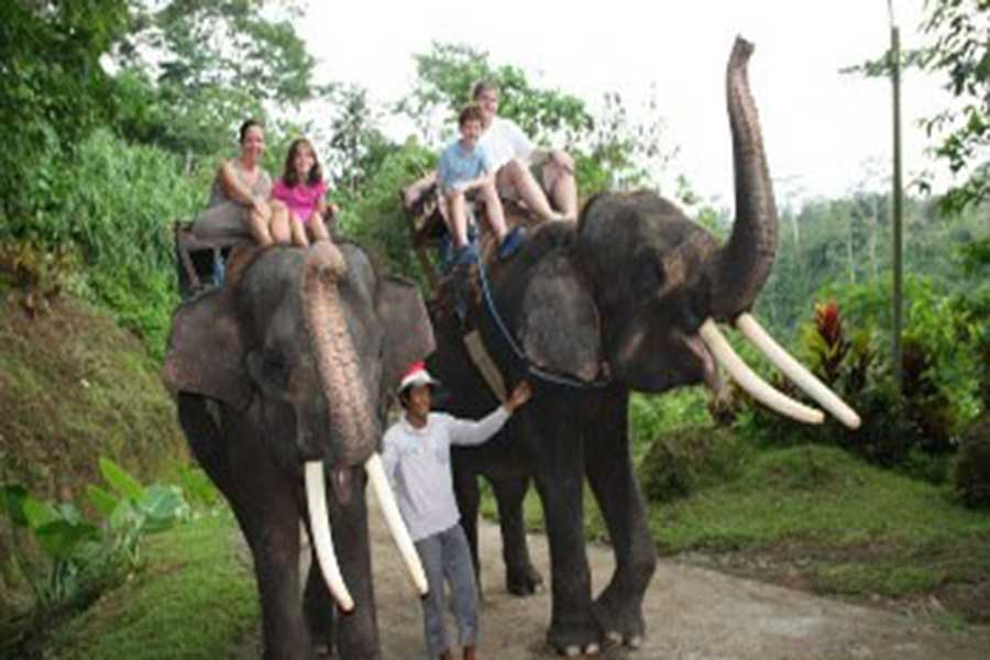 adventures with elephants, bali adventure park, explore bali