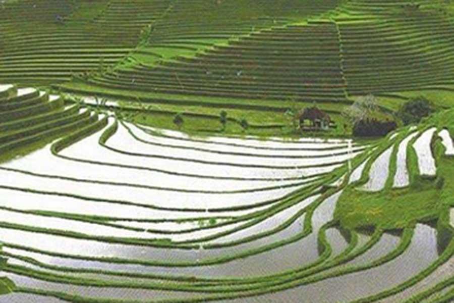belimbing village, rice terrace, bali