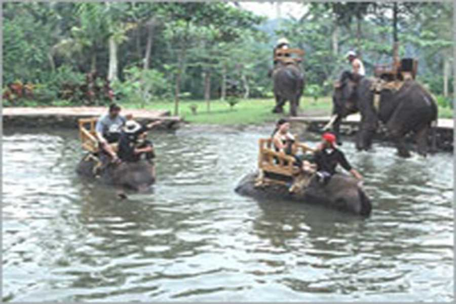 elephant tour, interesting place in bali, elephant rides
