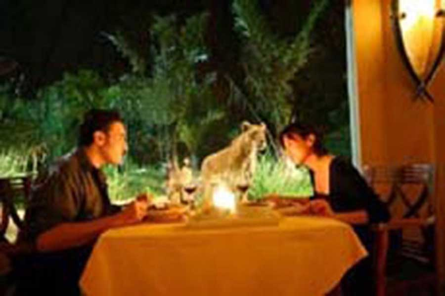 dinning at tsavo lion restaurant