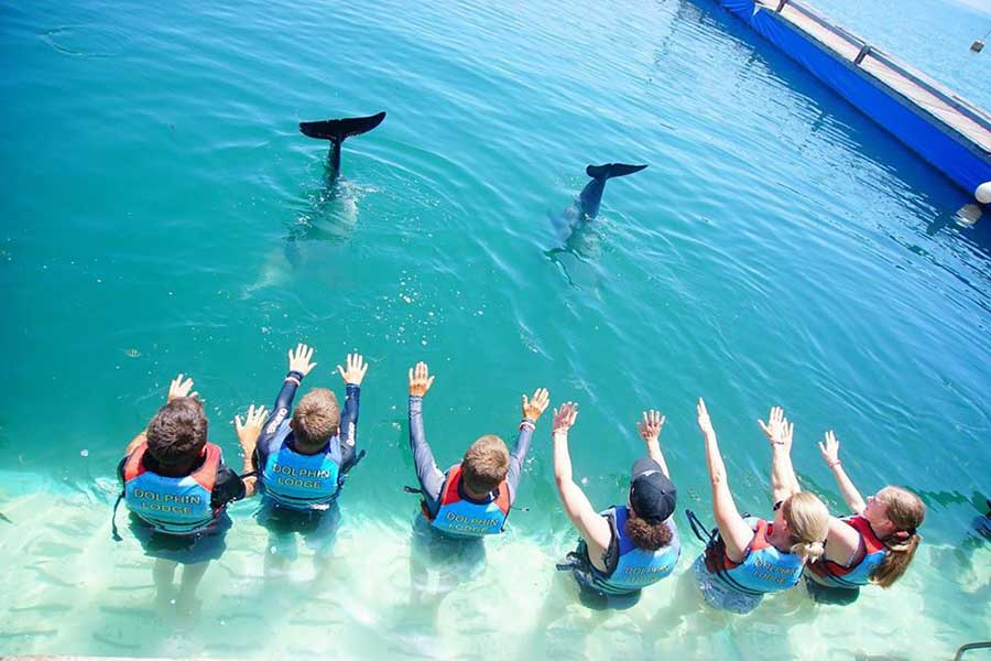dolphin interaction, bali dolphin lodge