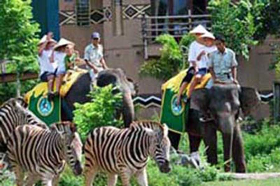 elephant riding, bali safari, bali safari and marine park