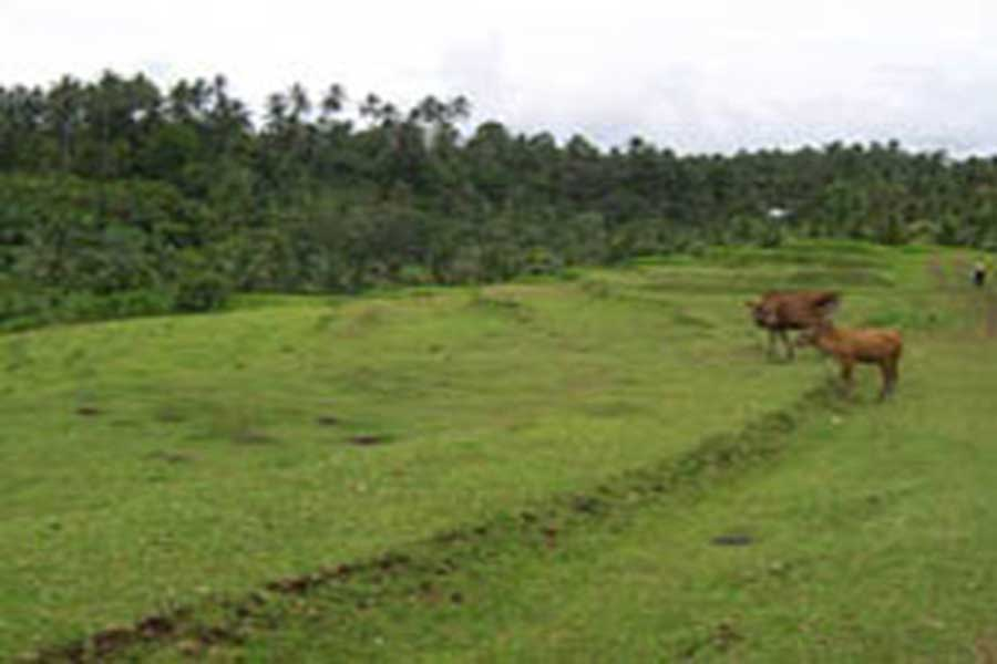 local peoples, countryside tours, vw bali safari