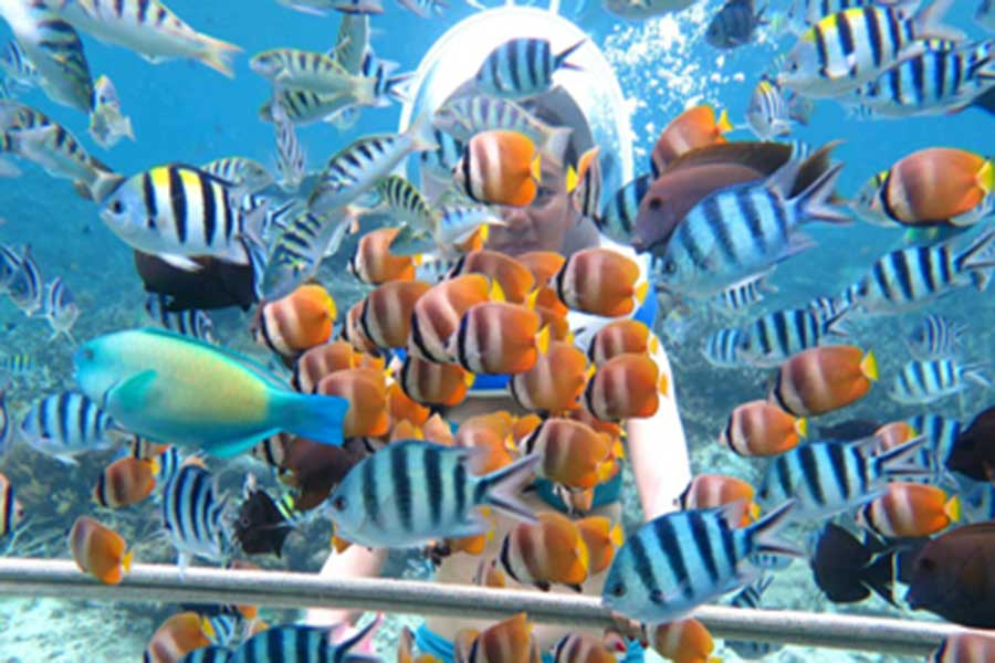 marine explore, marine walk, lembongan island
