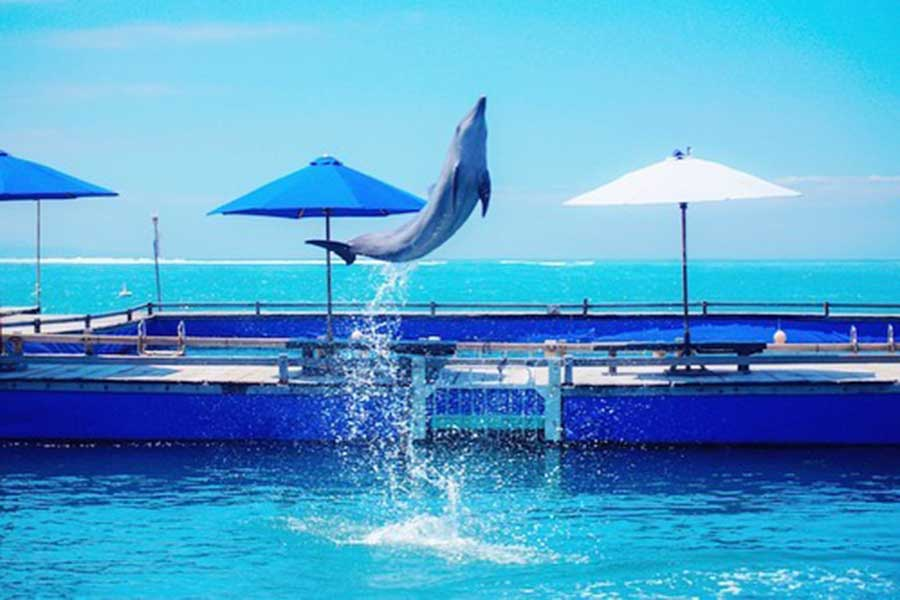 mertasari dolphin lodge, sanur beach, bali dolphin lodge