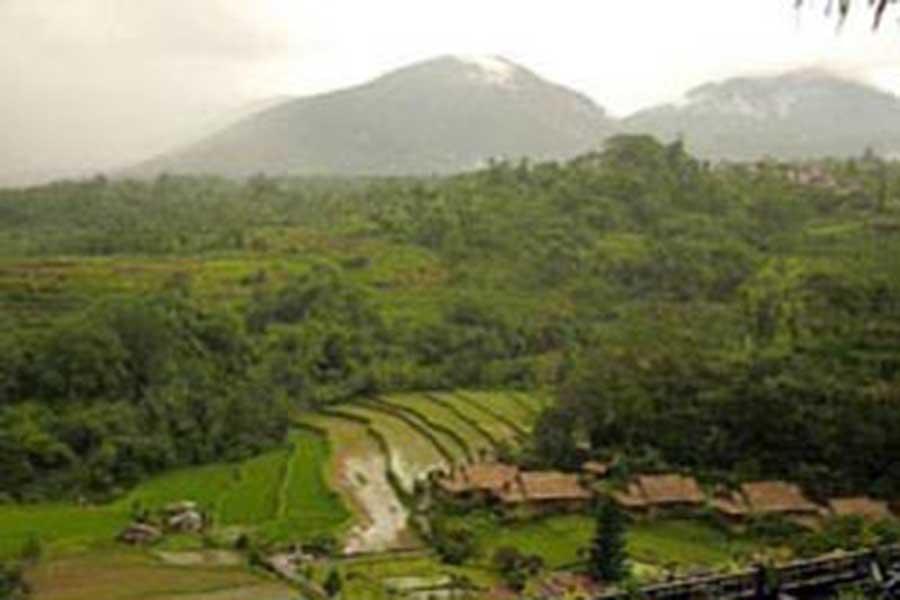 rice terrace, bedugul bali, sightseeing bali, visiting bali