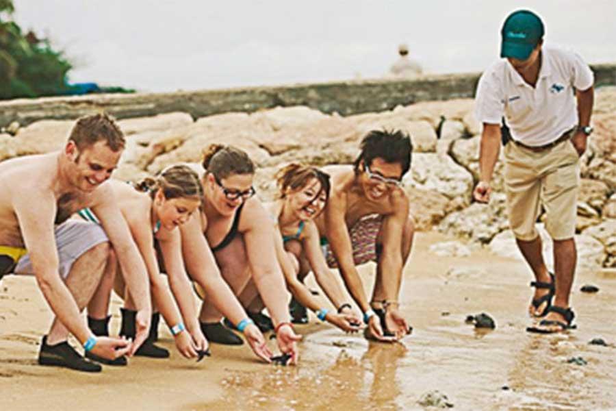 release the baby turtle, seawalker program, sanur