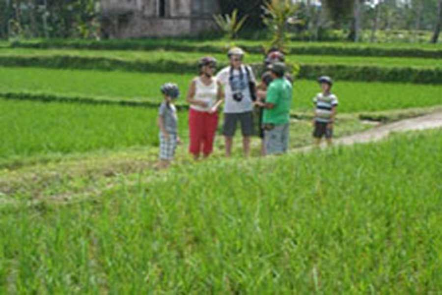 rice field view, bali emerald cycling, bali cycling