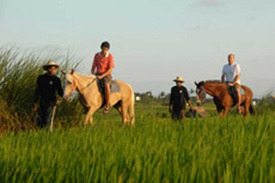 rice field horse riding, bali horse riding