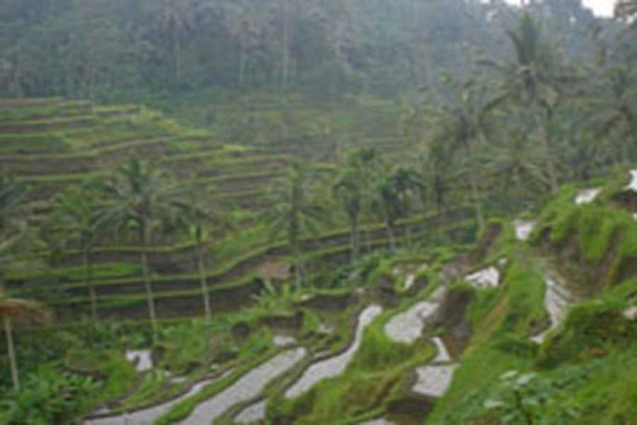 rice terrace view, bali bike, bali by bike, cycling adventures