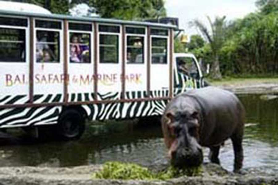 bali marine park, the zoo, zoo, bali things to do, zoo pass