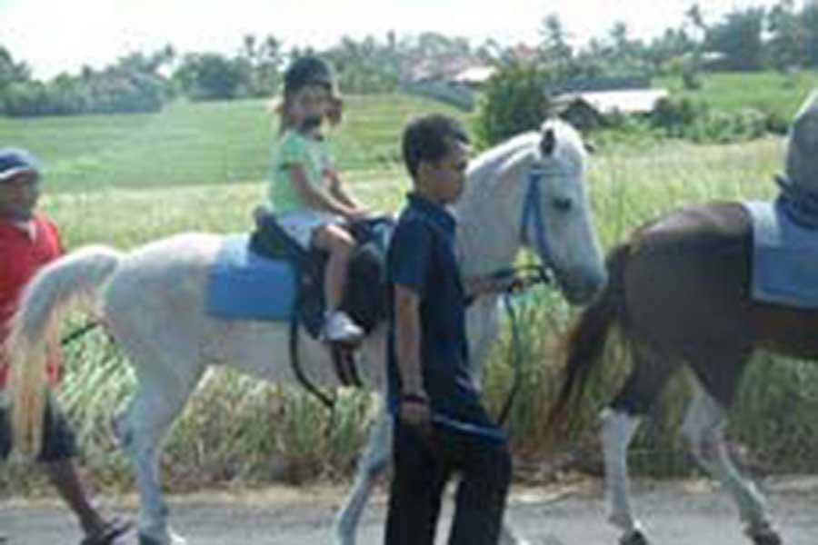 horse riding bali, bali horse