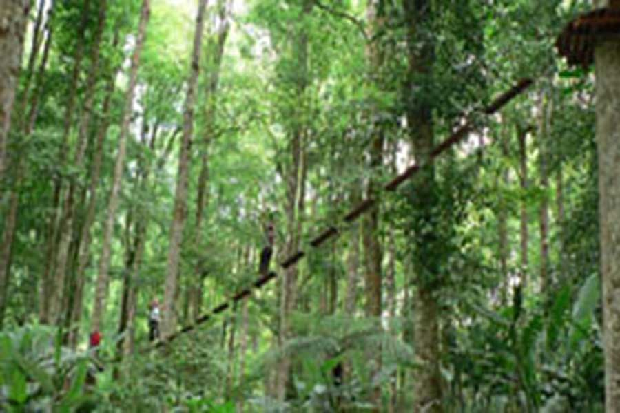 treetop adventure park bali