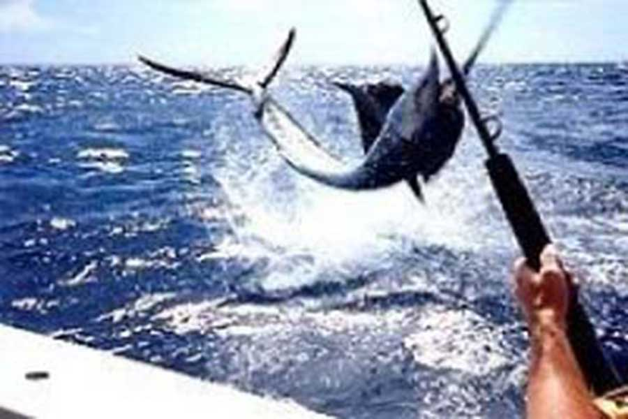 trolling fishing, fishing bali, bali fishing