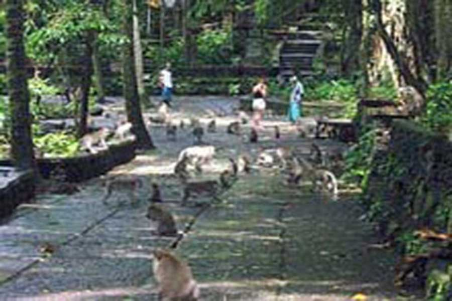 monkey forest, sightseeing bali, visiting bali