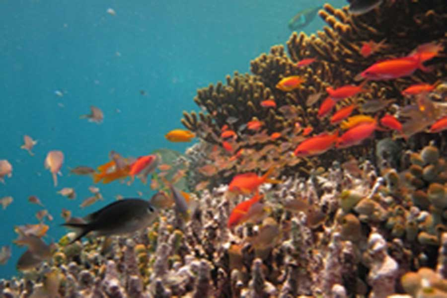 under water view, bali hai cruise, bali hai