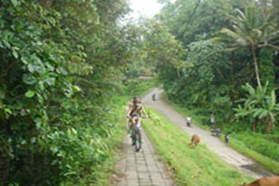 village cycling, cycle bali, bali tourism, cycling safaris, travel to bali