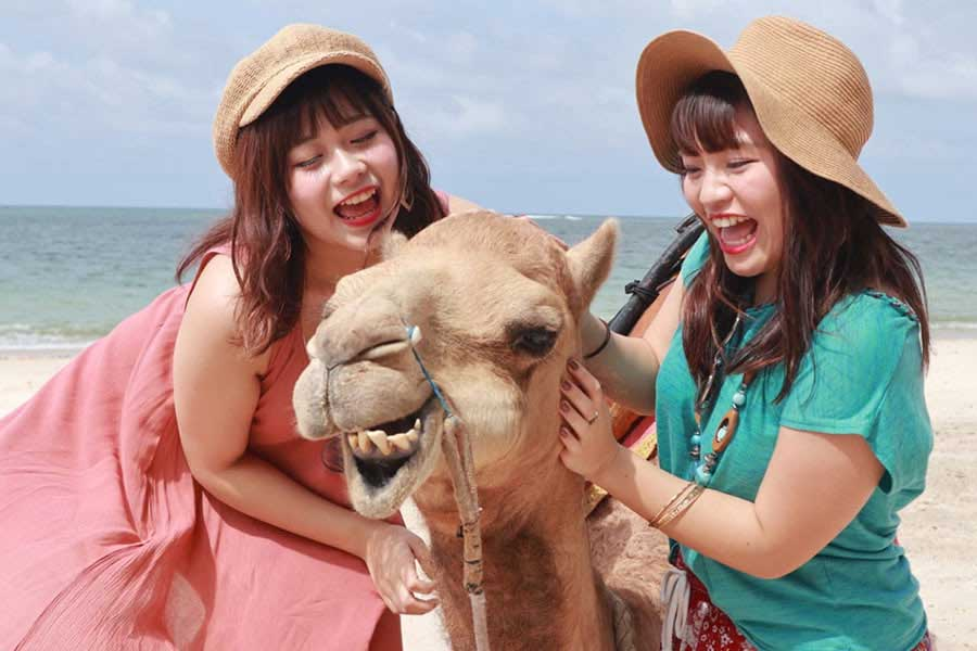 bali camel adventure, kelan beach bali