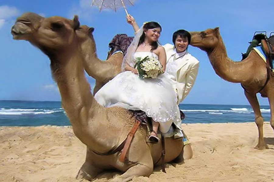 photo wedding with camel in bali