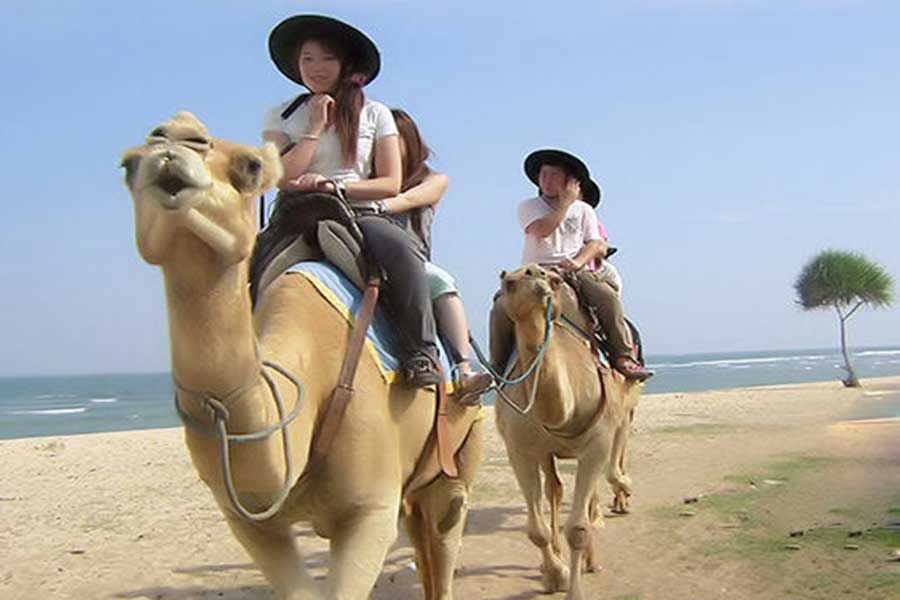 bali camel safari, riding a camel along the white sand beach