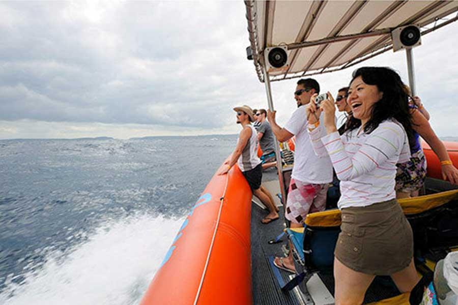 bali hai, dolphin cruise, bali cruise