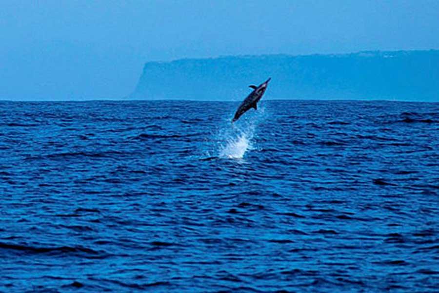 dolphin cruise, wild dolphin bali