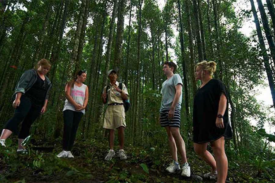 bedugul rain forest