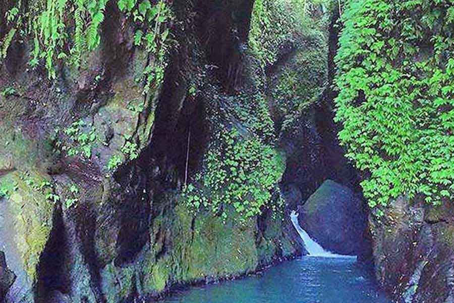 green wall at beji guwang bali