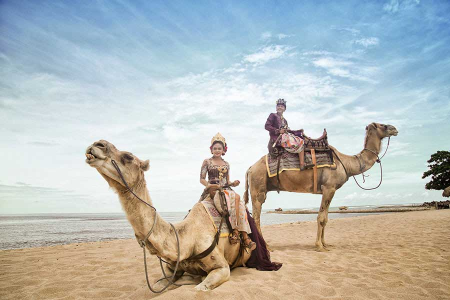 camel photo wedding, hilton bali resort