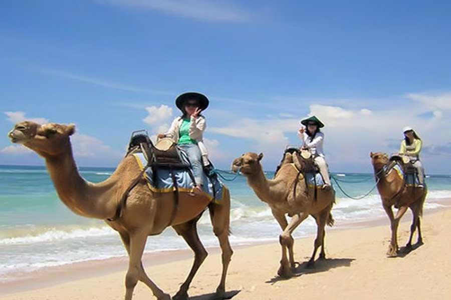 camel safari located at hilton bali resort nusa dua