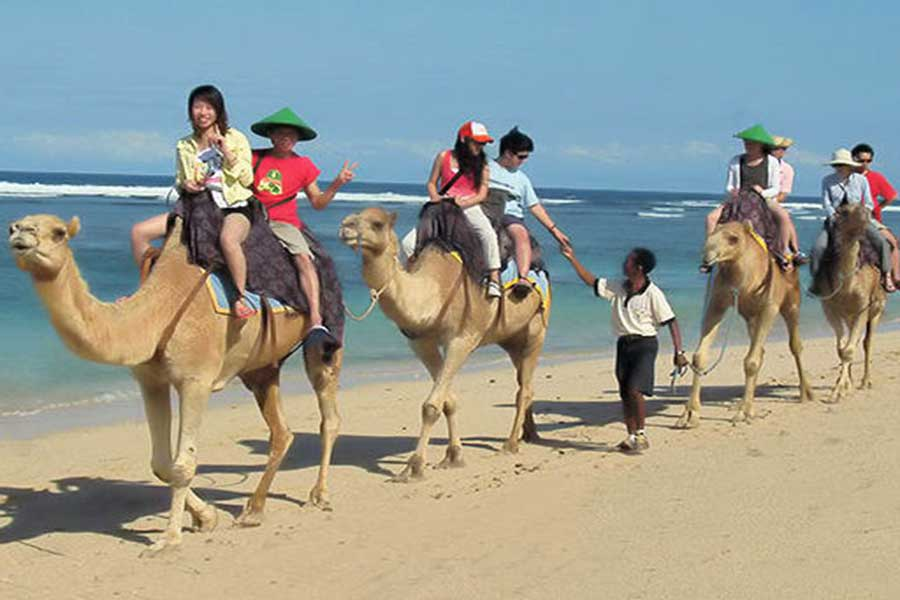 camel safari bali located at hilton beach resort