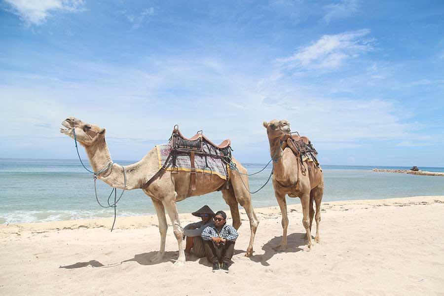 camel photo wedding, camels instructor