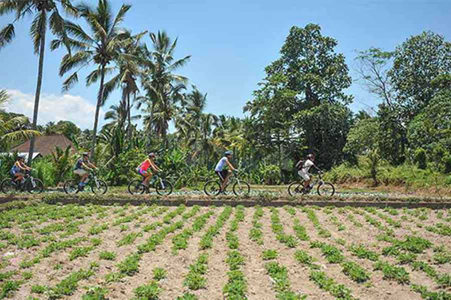 carangsari village, cycling tour, plantations
