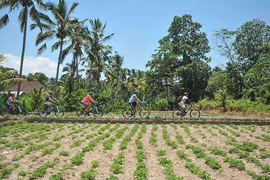 carangsari village, cycling tour, plantations