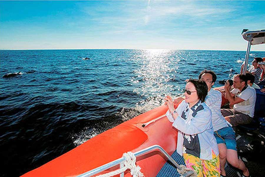 see wild dolphins, bali dolphin cruise, bali hai cruise