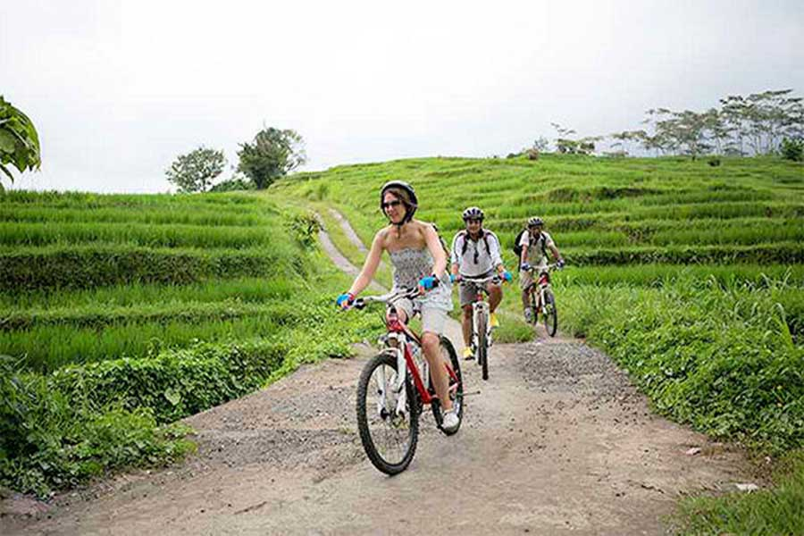 cycling tour, rice terrace jatiluwih