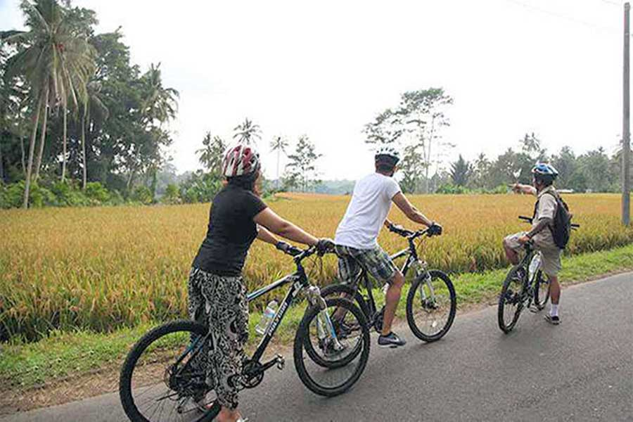 bali cycling tour, rice paddy view