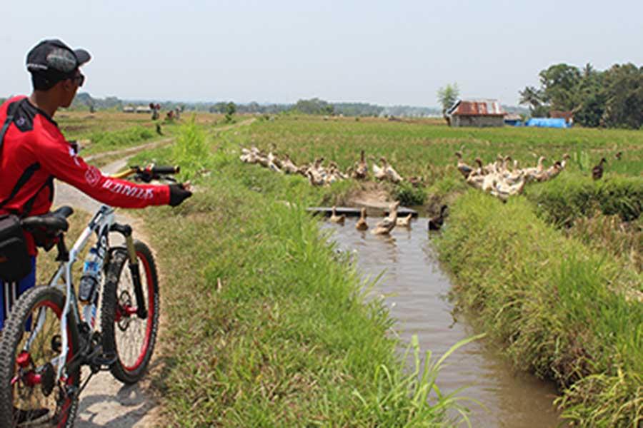 duck breeder, luwus village, bali moon bike