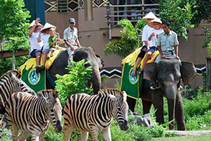 elephant back safari, bali safari, rhino package