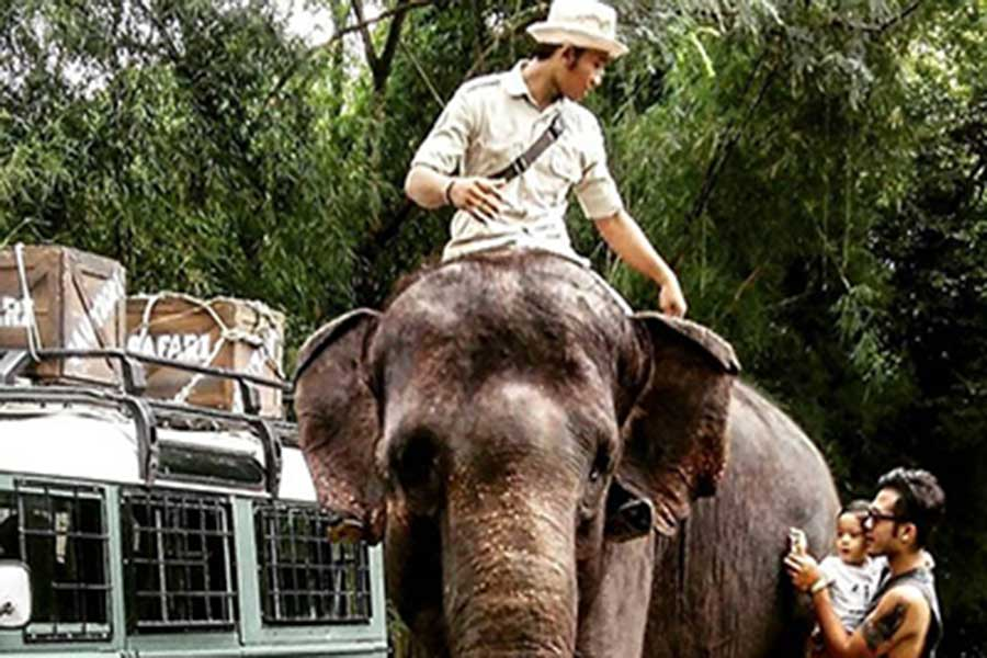 elephant back safari, bali safari, domestic tickets