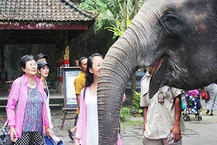 bali safari tickets, domestic, elephant education