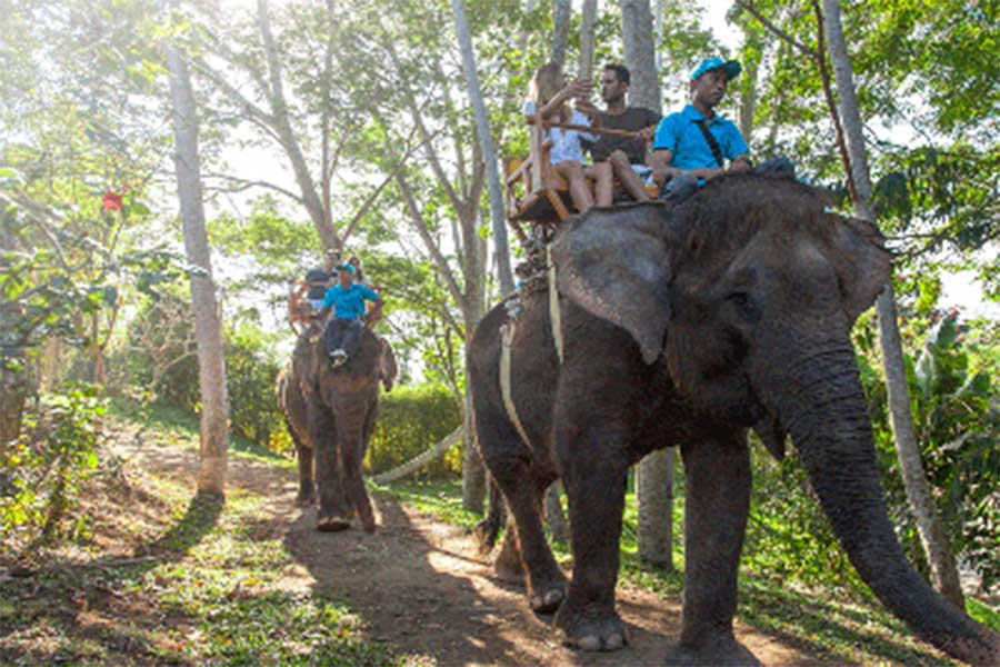 elephant safari, buggy tour package, bali zoo park