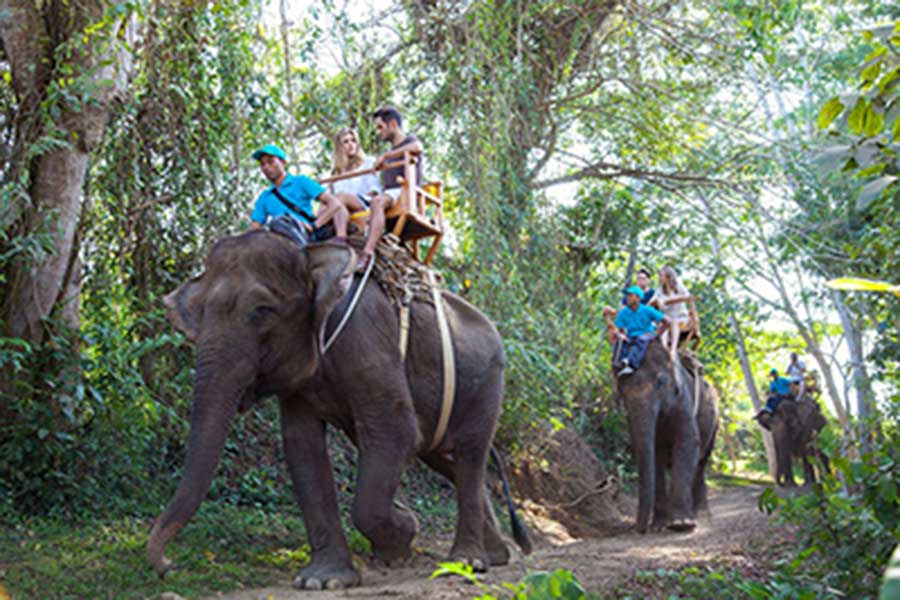 elephant safari, bali zoo park, buggy tour package
